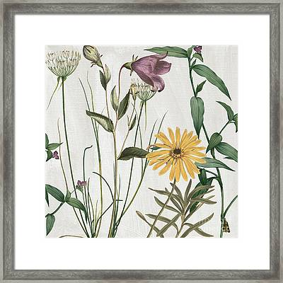 Softly Crocus And Daisy Framed Print by Mindy Sommers
