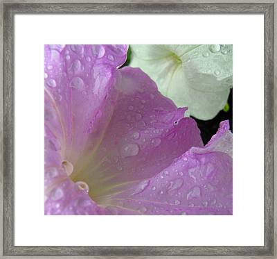 Softly Falls The Rain Framed Print