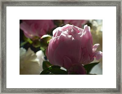 Softly Highlighted Framed Print by Tina M Wenger