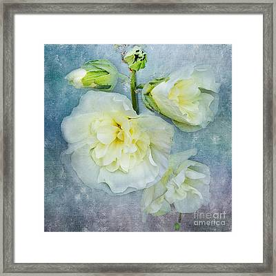 Framed Print featuring the photograph Softly In Blue by Betty LaRue