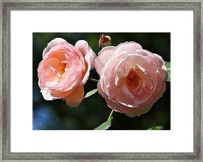Framed Print featuring the photograph Softly Pink by Al Fritz