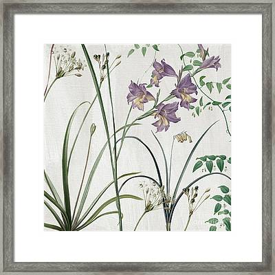 Softly Purple Crocus Framed Print