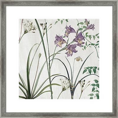 Softly Purple Crocus Framed Print