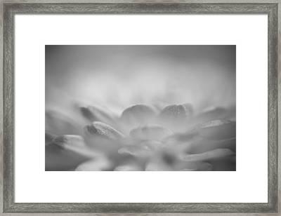 Softly Radiant Framed Print by Lori Burgoyne