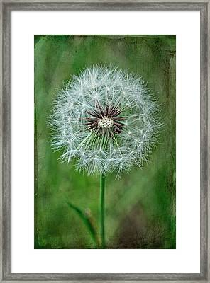 Framed Print featuring the photograph Softly Sitting by Jan Amiss Photography