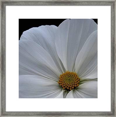 Softly White Framed Print by Marilynne Bull