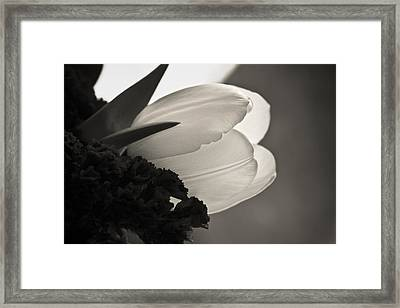 Lit Tulip Framed Print by Marilyn Hunt
