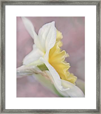 Framed Print featuring the photograph Softness Of A Daffodil Flower by Jennie Marie Schell