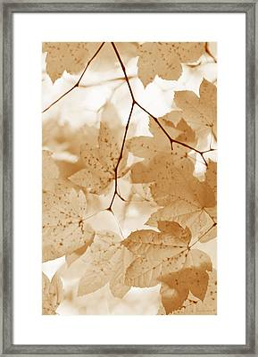 Softness Of Rusty Brown Leaves Framed Print