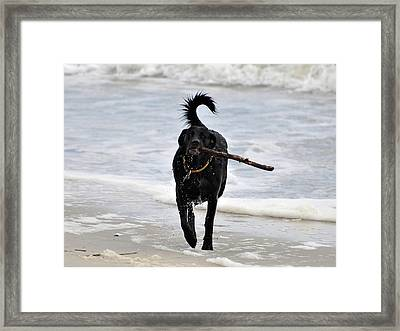 Soggy Stick Framed Print by Al Powell Photography USA