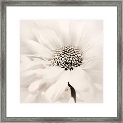 Framed Print featuring the photograph Soiree In Sepia by Darlene Kwiatkowski