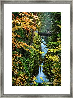 Sol Duc Falls In Autumn Framed Print by Inge Johnsson