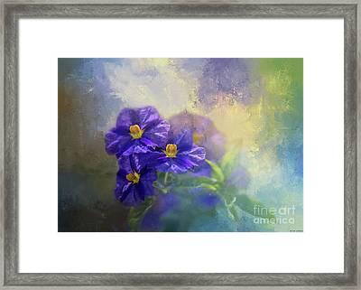 Solanum Framed Print by Eva Lechner