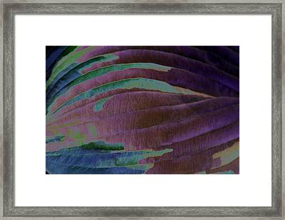 Solar Amazon Framed Print by Carolyn Stagger Cokley