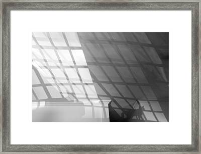 Solar Cat I 2013 Limited Edition 1 Of 1 Framed Print