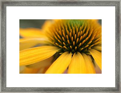 Solar Flare Framed Print by Connie Handscomb