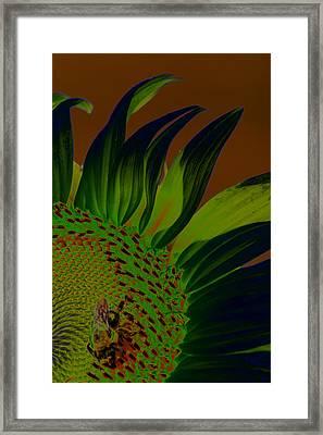 Solar Sunflower Framed Print by Carolyn Stagger Cokley