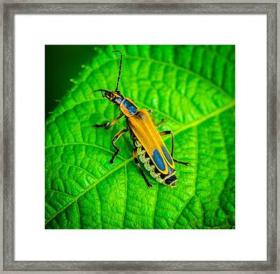 Soldier Beatle Macro Framed Print by Bruce Pritchett