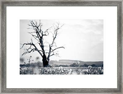 Solemn Oak Framed Print