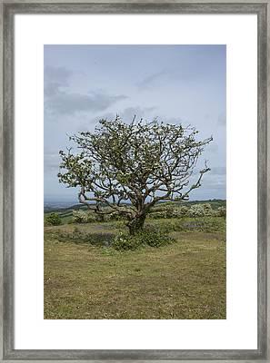 Framed Print featuring the photograph Solemn Sapling by Stewart Scott