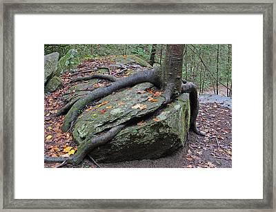 Solid Foundation Framed Print by Walt Reece