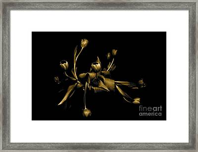 Framed Print featuring the photograph Solid Gold by Danica Radman