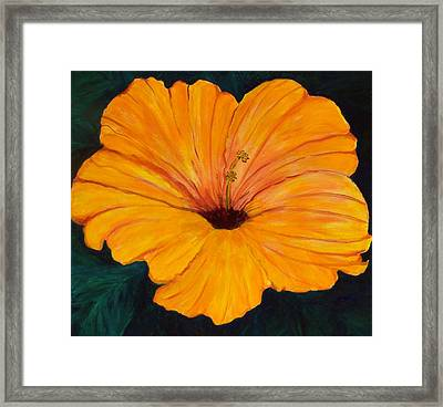 Solid Gold Framed Print by Marcia Paige