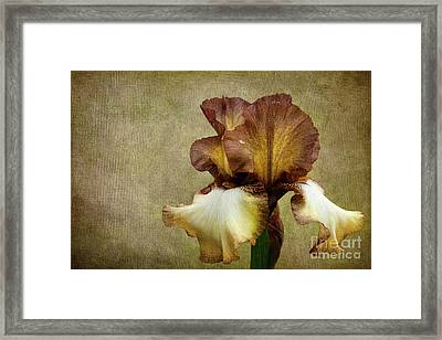 Solitaire Framed Print by Beve Brown-Clark Photography