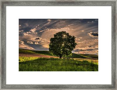 Solitarty Backlit Tree In The Palouse Framed Print