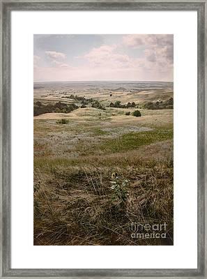 Solitary Beauty Framed Print by Sandy Adams