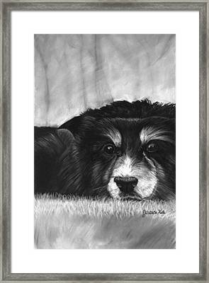 Solitary Dog Framed Print by Jessica Kale
