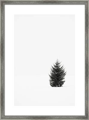 Solitary Evergreen Tree Framed Print by Jennifer Squires