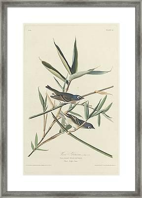 Solitary Flycatcher Framed Print