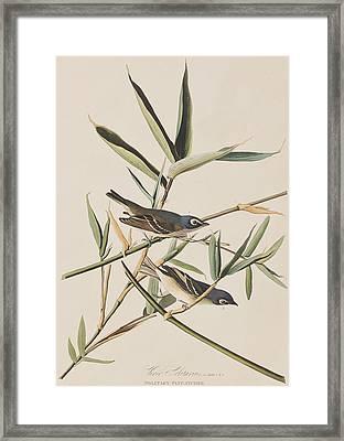 Solitary Flycatcher Or Vireo Framed Print by John James Audubon