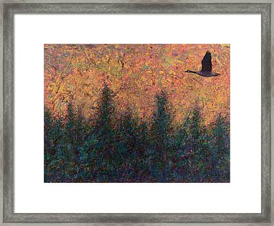 Solitary Goose Framed Print by James W Johnson