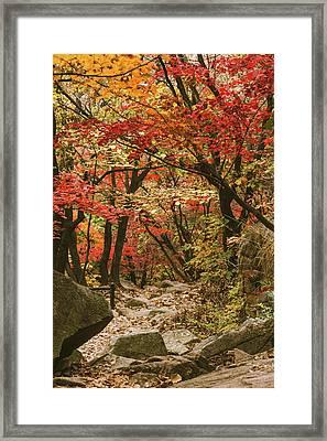 Solitary Framed Print by Hyuntae Kim