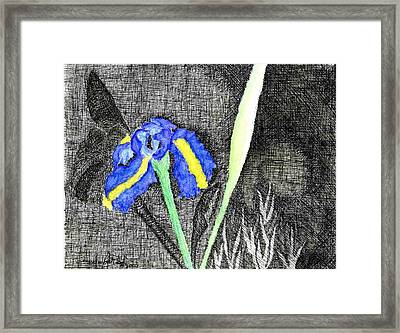 Solitary Iris Framed Print by Saundra Lee York