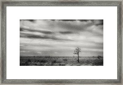 Solitary Joshua Framed Print by Joseph Smith