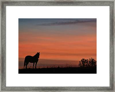 Solitary Morning Framed Print by Stephanie Laird