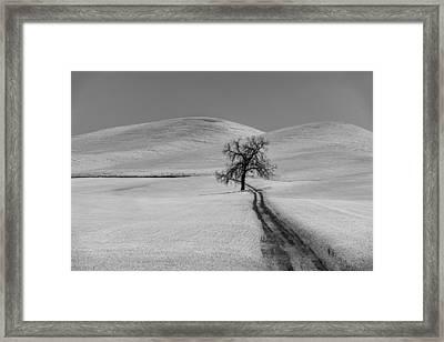 Solitary Oak Framed Print
