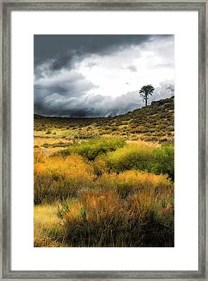 Framed Print featuring the photograph Solitary Pine by Frank Wilson