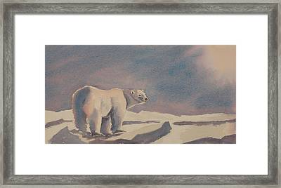 Solitary Polar Bear Framed Print by Debbie Homewood
