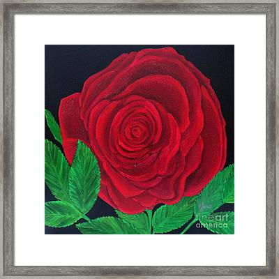 Solitary Red Rose Framed Print