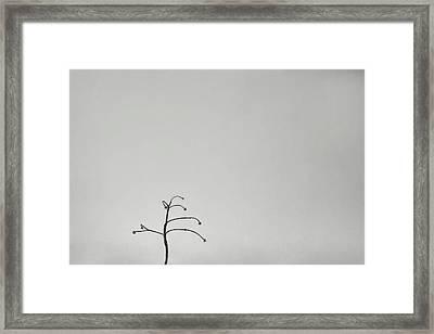 Solitary Framed Print by Scott Norris