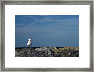 Solitary Seagull Framed Print