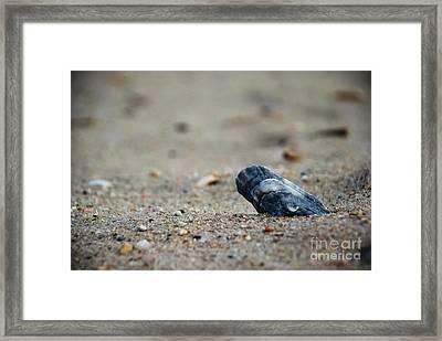 Solitary Shell Framed Print by Joseph Perno