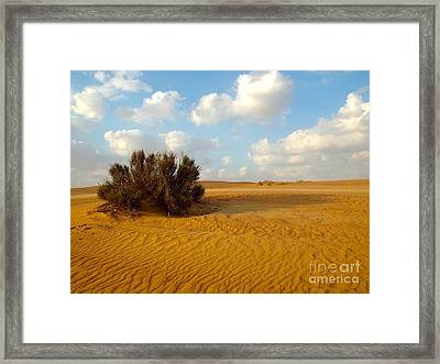 Solitary Shrub Framed Print