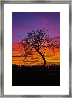 Solitary Framed Print by Tom Clark
