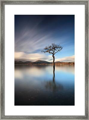 Solitary Tree Framed Print by Grant Glendinning