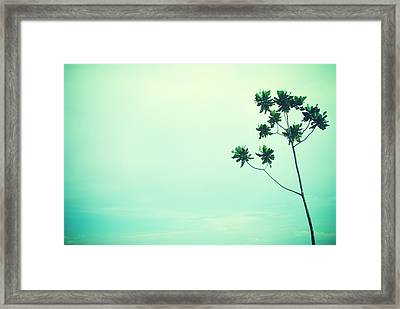 Solitary Tree Framed Print by Susette Lacsina